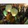 Lanterna Volante Verde: Le nostre lanterne volanti pronto per l'uso, facile da usare, per un anniversario, un matrimonio, una laurea